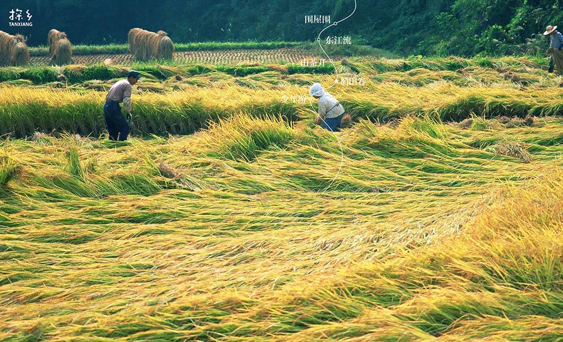 探乡农业网页设计